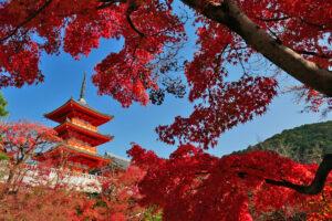 《和を堪能する旅》古都「京都」をレンタル着物で散策するプランはいかがですか?